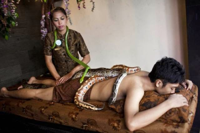 The client receives massage using reflexology pythons Center in Bali October 27, 2013, in Jakarta, Indonesia.