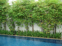 Bamboo Privacy Screen1