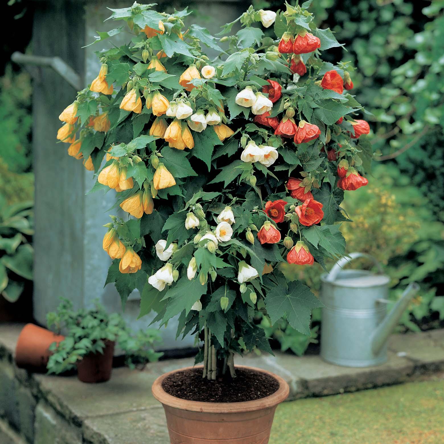 Комнатный цветок его выращивание 691