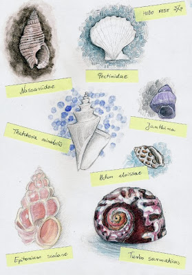 watercolor_and_pencil_seashells