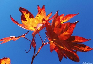 Autumn Sky  August 2012