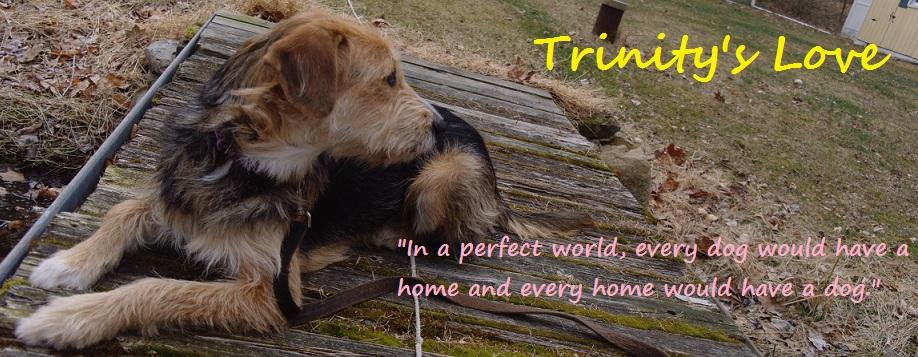 Trinity's Love
