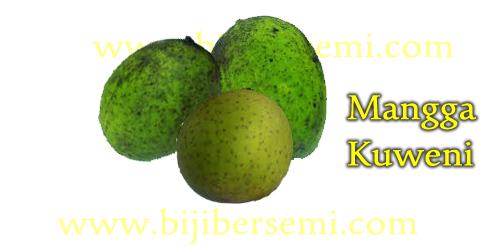 Cara menanam mangga, mangga kuweni