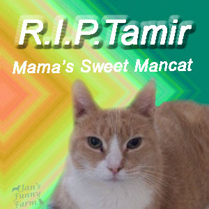 Run free sweet Tamir