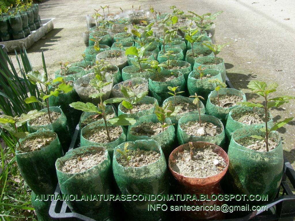 AIUTIAMO LA NATURA SECONDO NATURA: VIVAIO FORESTALE AMATORIALE 2013
