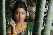 Shriya Saran latest Photos in saree-thumbnail-16