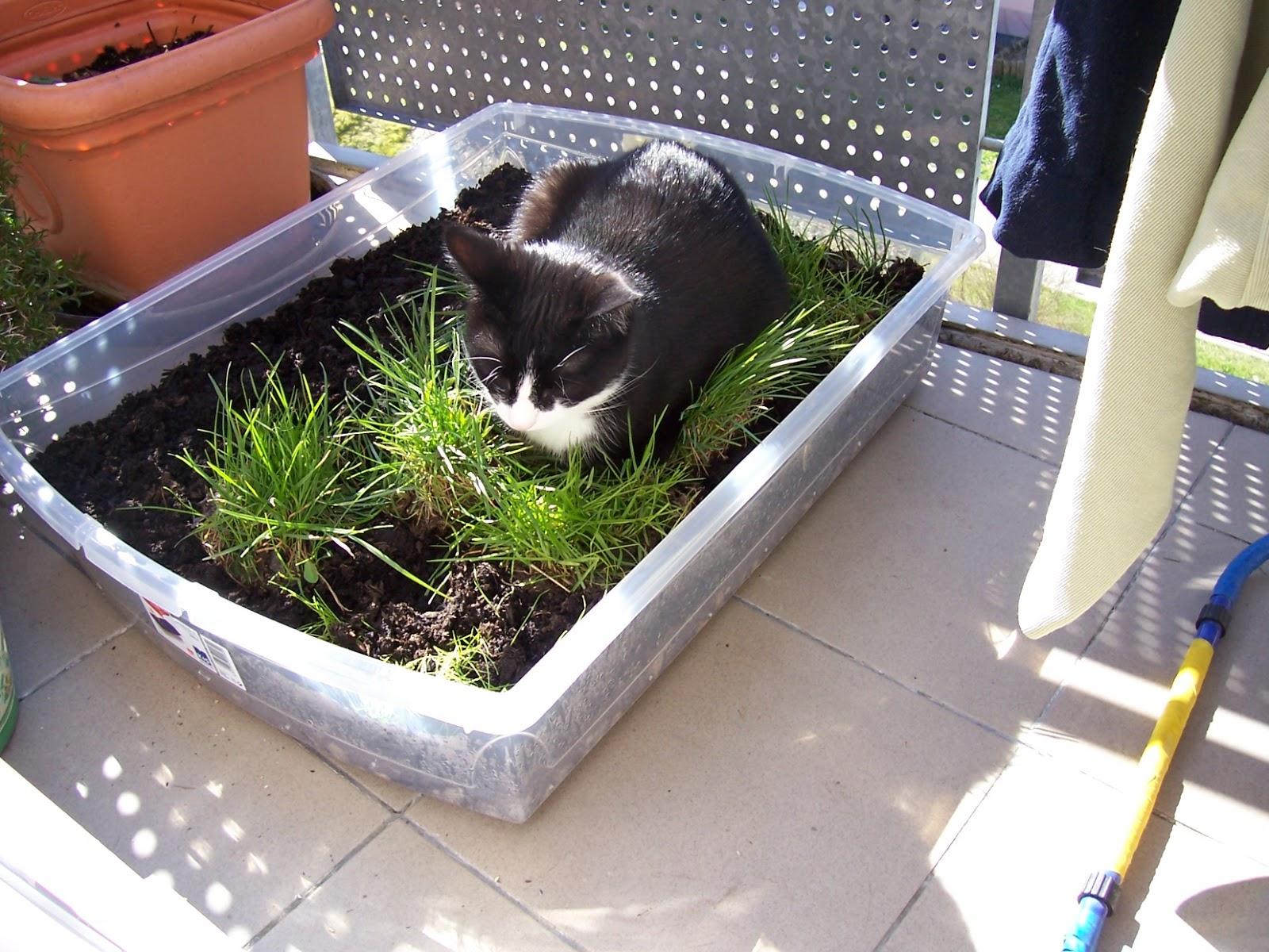 Katzenwissen eine mini wiese auf dem balkon f r - Mini pool fur balkon ...
