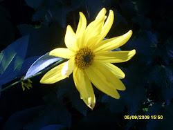 Hirvensilmä puutarhan huojuva aurinko