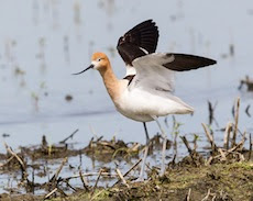Strong Partnerships help drought  survival of Waterbirds