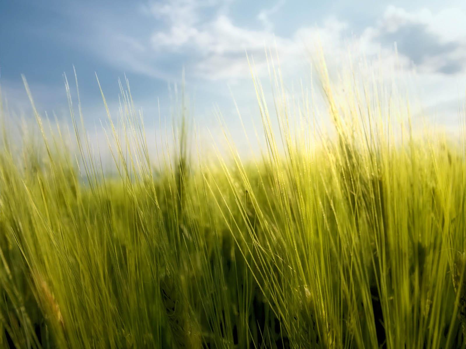 http://2.bp.blogspot.com/-RNksd5LQwFs/UL4LwgyqNrI/AAAAAAAAOd0/mqtkhV6_ixM/s1600/Tall+Grass+Wallpapers+07.jpg