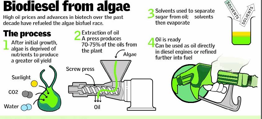 Algae- Green Fuel of the Future | akshay