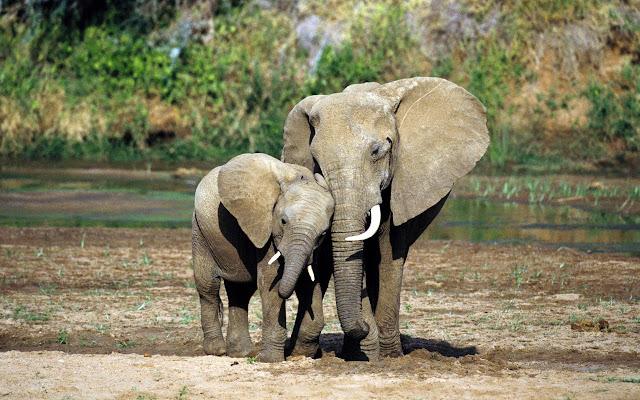 Fotos De Elefantes