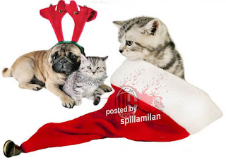 Copy 2 Of Christmas Dogs And Cat Photos Images Picture