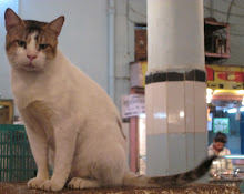 "Late ""RADHE(Rajesh)"", largest cat in Worli fish market of Mumbai."