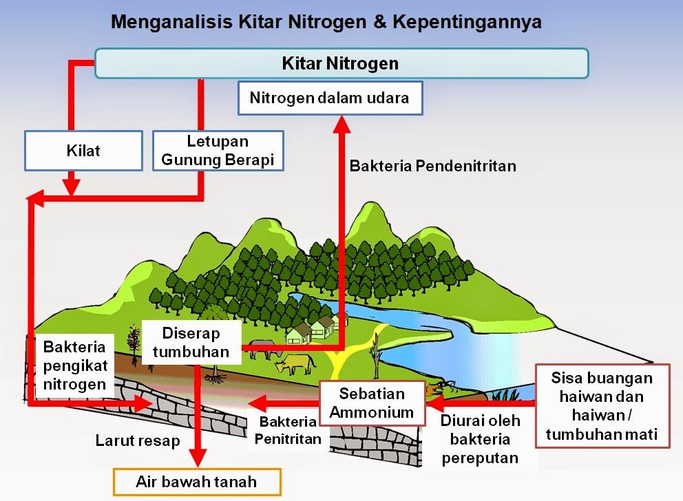 Kitar Nitrogen dan kepentingannya