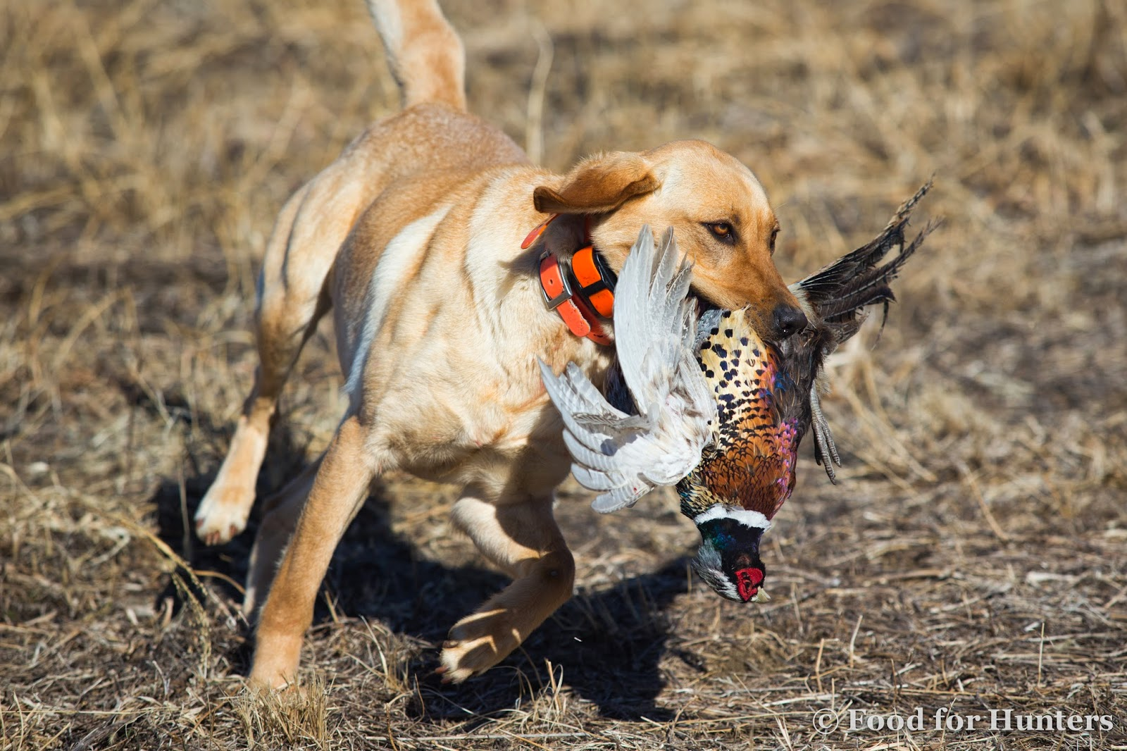 how to train a dog to fetch birds