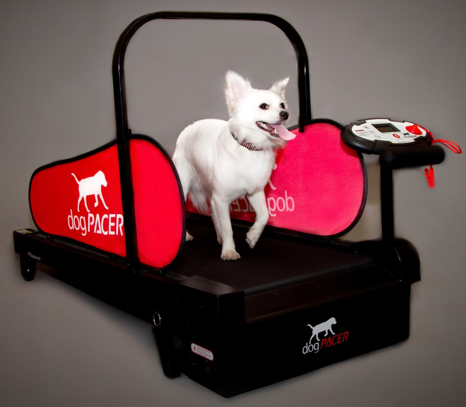 Dog walker at home /  Treadmill for dogs