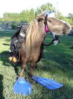 horse diver