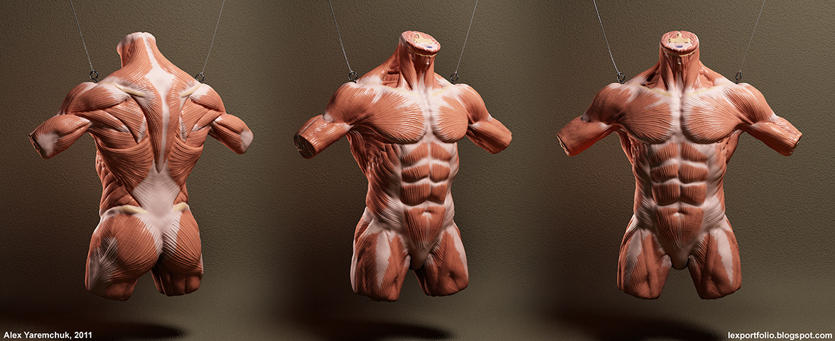Amazing Muscle Anatomy Game Motif Anatomy And Physiology Biology