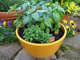 Growing ve ables and herbs in containers takes a little extra effort but can be as successful as in a regular garden There are many mistakes and pitfalls