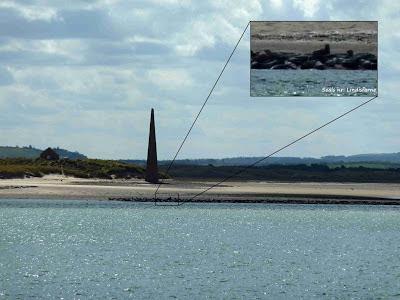 Seals, Lindisfarne