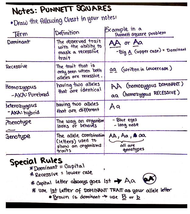 Spendlove Biology 20122013 October 2012 – Spongebob Punnett Square Worksheet