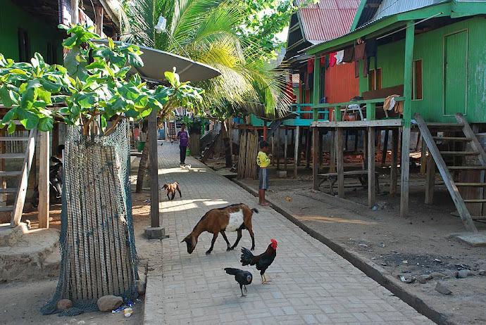 Cabras y gallos en la calle