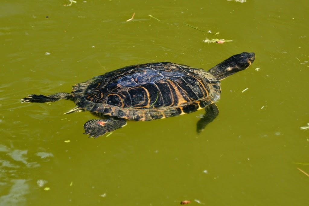 Margherita Gardens Bologna turtle