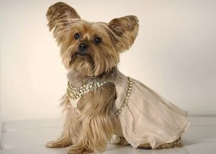fotos de roupas para cachorros