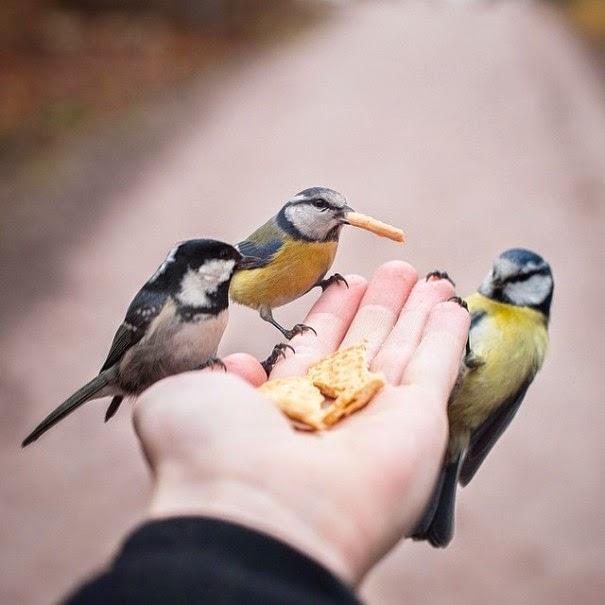 wildlife photography feeding animals konsta  punkka-6