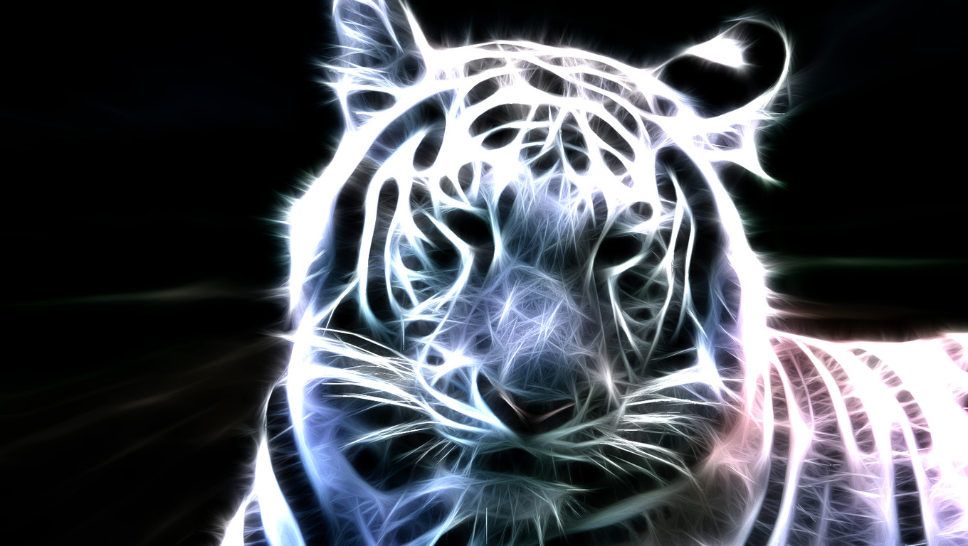 amazing white tiger wallpaper wallpaper pictures