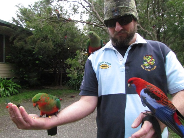Feeding King Parrots and Crimson Rosella