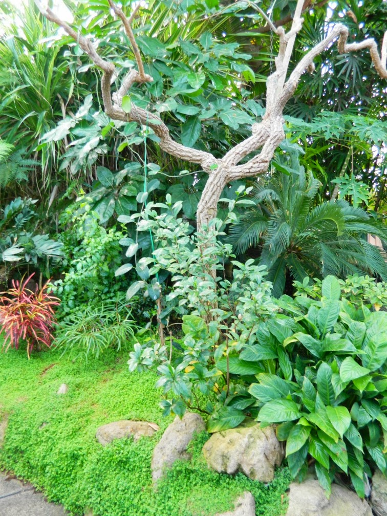 Centennial Park Conservatory tropical house bed  by garden muses-not another Toronto gardening blog