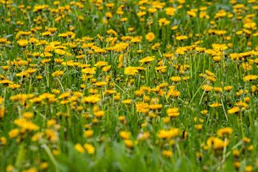 Ce-ar fi viața fără flori...