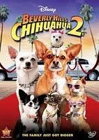 film chihuahua