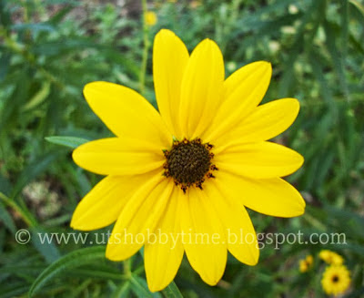 yellow flower-photography