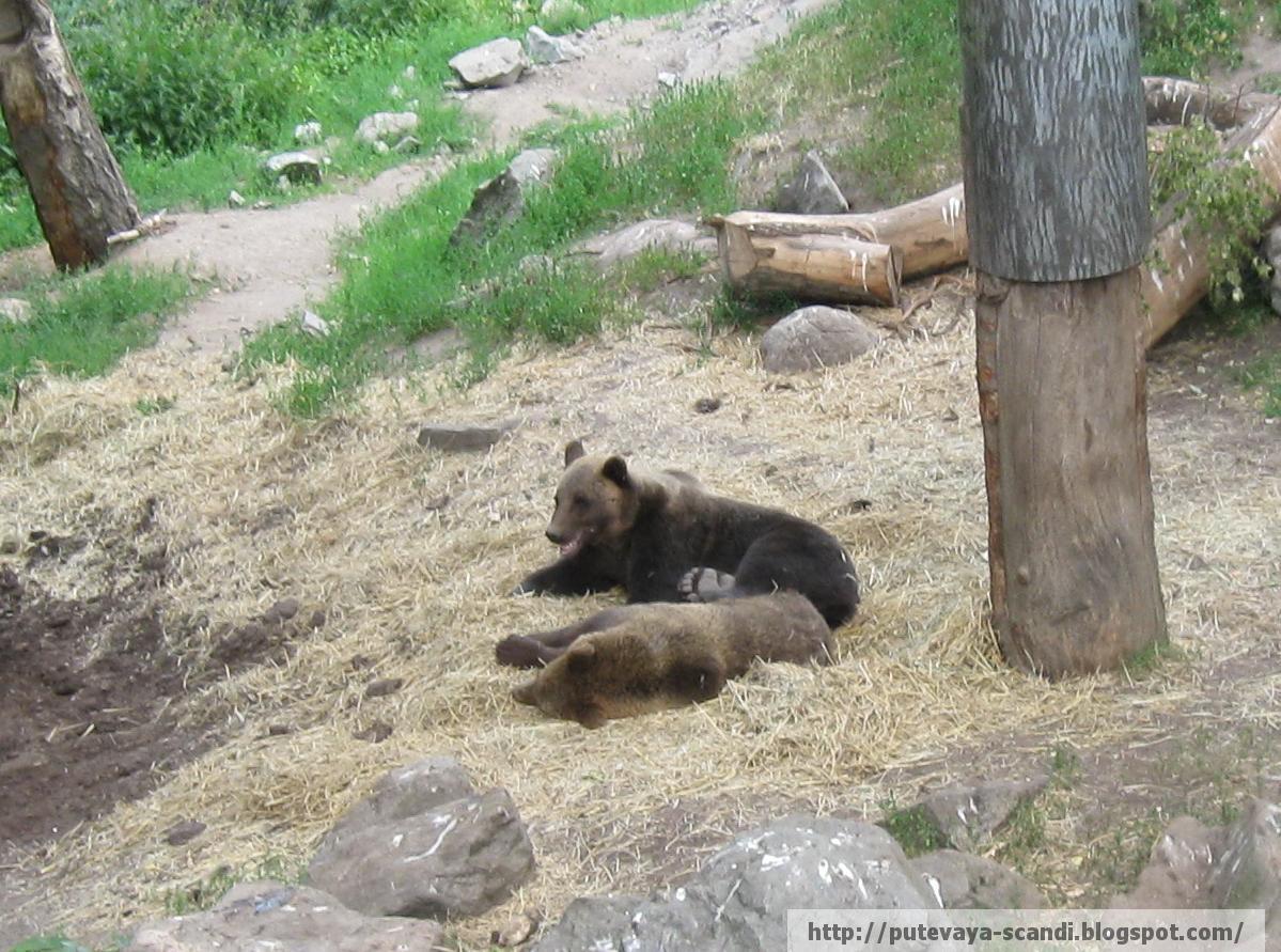 медвежий полдень