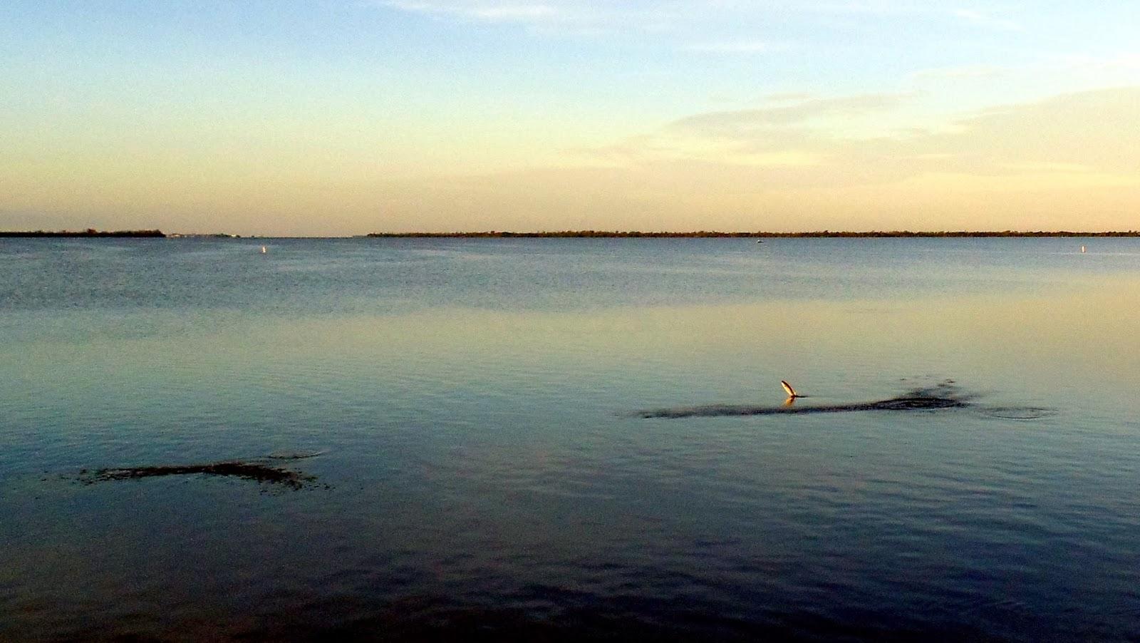 Pine island florida bokeelia morning for Bokeelia fishing pier
