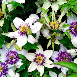 Lisa´s Gartenimpressionen