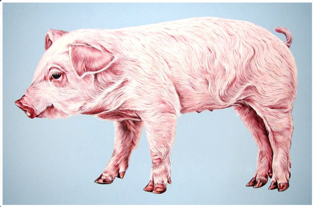 Scott Zaragoza, pig painting