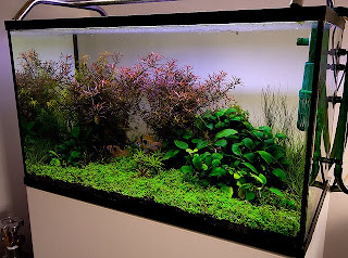 Macro And Micro Nutrients Of Aquascape Aquarium Plants