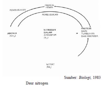 Pengertian dan Proses Daur Biogeokimia