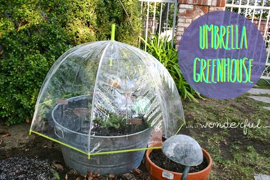 Build Your Personal Garden Greenhouse