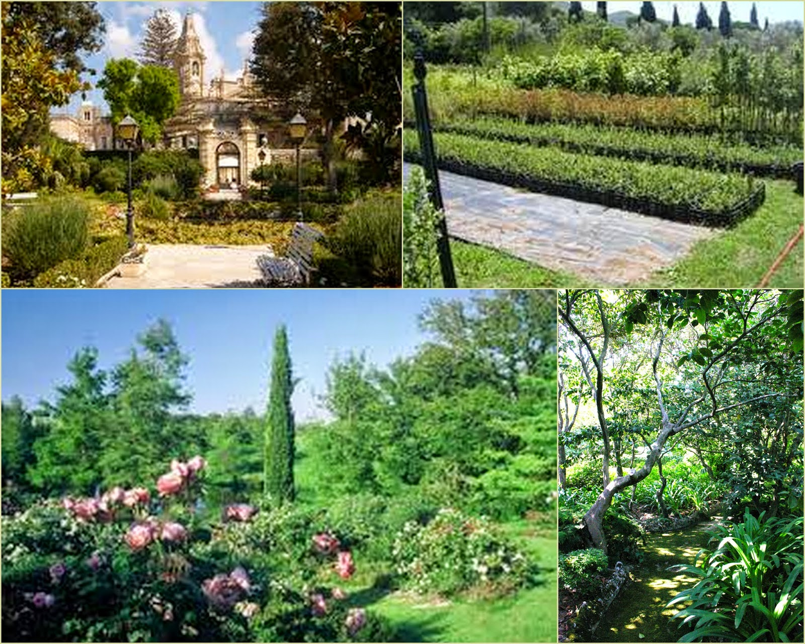 Il giardino mediterraneo con tanto sole e poca acqua - Giardino mediterraneo ...