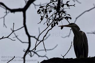 héron ombre chinoise dans les arbres