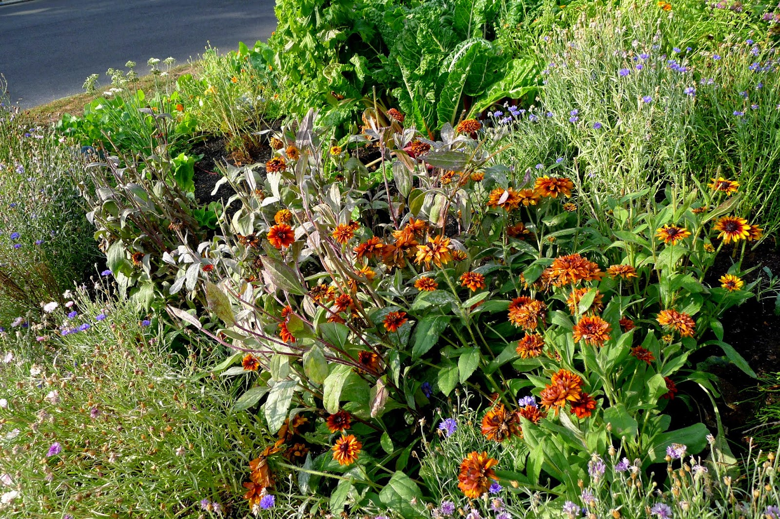 Edible landscaping, fall plantings, urban farming, gardening