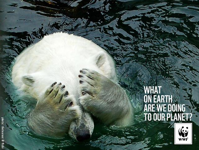 http://2.bp.blogspot.com/-RRtCy11yhz8/Ubct65BZ9rI/AAAAAAAAQYs/wF9UEBVa3qo/s1600/WWF-Denmark-Polar-Bear.jpg