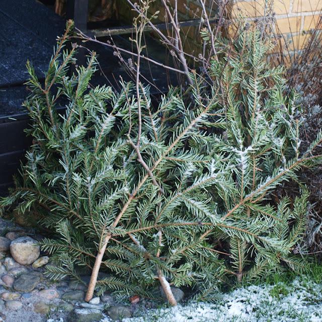 Vinterdække til havens planter