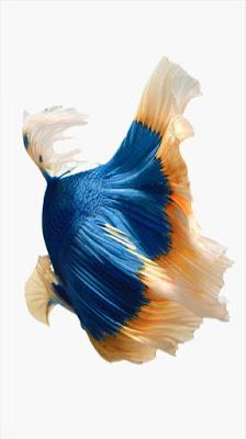 iphone 6s Wallpaper hd fish