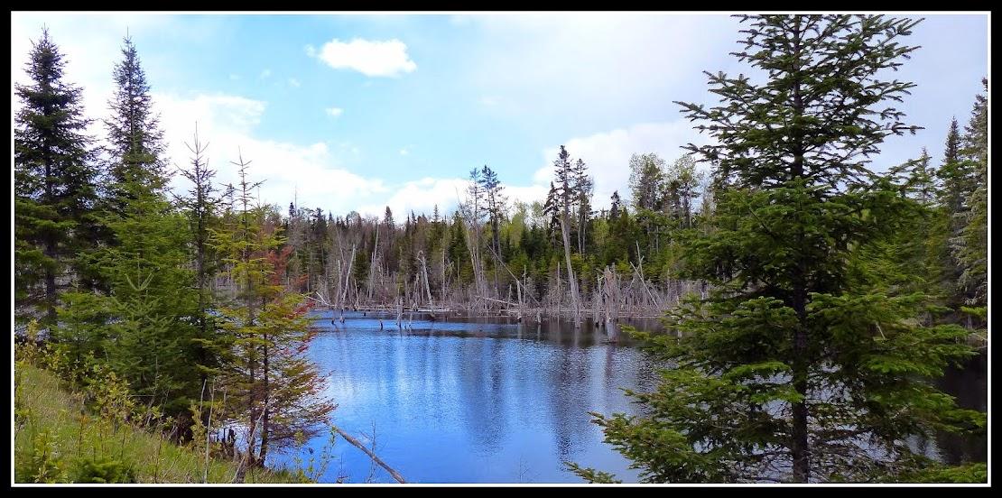 Aroostook NWR.....  Maine
